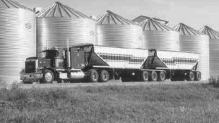 LOW ELEVATION: By January 2000 the bottom had fallen out of the canola market; it was selling for $239.61/tonne.