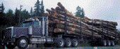 HARDWOOD: Loggers face a huge insurance increase.