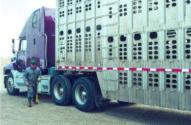 VITAL ROLE: Livestock haulers will be instrumental in containing the disease, should an outbreak occur.