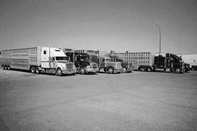 PARKED: Cattleliners have been parked in truck stop parking lots for weeks on end.Photo by James Menzies