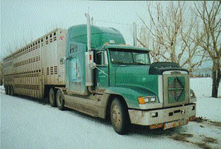 HANGING ON: Grace Cattle Carriers is still in business, but many other cattle carriers haven't been as fortunate.Photo by James Menzies