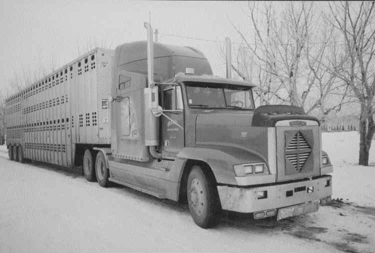 SAVING GRACE: Grace Cattle Carriers has survived thanks to its strong relationship with a local packing plant.Photo by James Menzies