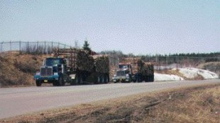 UNEXPECTED CONSEQUENCES: Logging service trucks are being held to the same HoS standards as traditional log trucks.