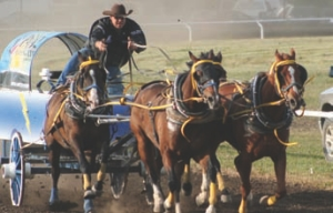 NO SPEED LIMITERS: Mitch Sutherland's trucking business helps fund another form of horsepower -chuckwagon racing.