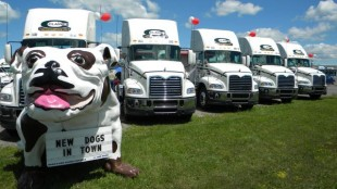 The Mack Bulldog oversees Claire's new fleet of trucks.
