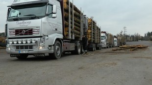 The Sundbergs trucks line up to unload at a Swedish sawmill.